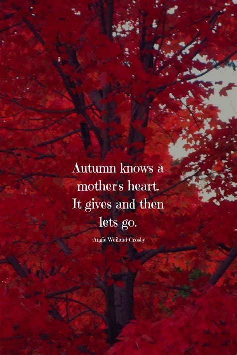 45+ Autumn Quotes & Fall Quotes and Captions to Enchant